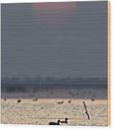 Sunset With Coots Wood Print