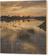 Sunset With Pigeons Wood Print