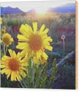 Sunsets And Sunflowers In Buena Vista Wood Print