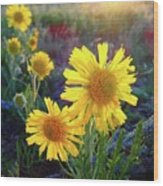 Sunsets And Sunflowers Of Buena Vista 2 Wood Print