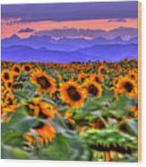 Sunsets And Sunflowers Wood Print