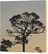 Sunsetting Thru The Trees Wood Print