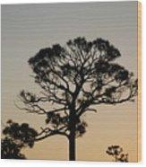 Sunsetting Thru The Trees Wood Print