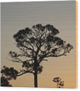 Sunsetting Trees Wood Print
