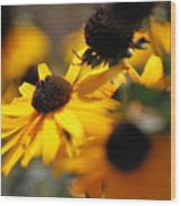Sunshine And Daisies Wood Print