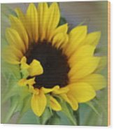 Sunshine Beauty - Sunflower Wood Print