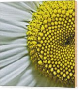 Sunshine Daisy Wood Print