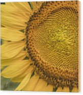 Sunshine Flower Wood Print