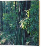 Sunshine In The Forest Wood Print