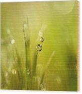 Sunshine Moss Wood Print