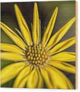 Sunshine On A Stem Wood Print