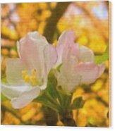 Sunshine On Apple Blossoms Wood Print