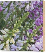 Sunshine On Foxgloves Wood Print