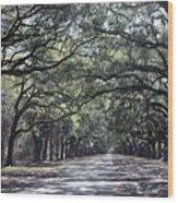 Sunshine On Live Oaks Wood Print