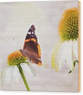 Sunshine On Red Admiral Wood Print