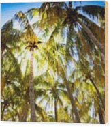 Sunshine Palms Wood Print