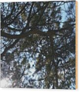 Sunshine Passes Pine  Wood Print