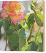 Sunshine Rose Wood Print