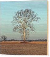 Sunshine Sycamore Wood Print