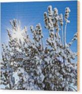 Sunshine Through Snow Covered Tree Wood Print