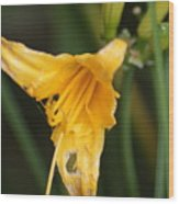 Sunshine Yellow Wood Print