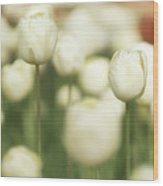 Sunsoaked Tulips #3 Wood Print