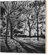 Super Contrasted Trees Wood Print