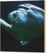 Super Turtle Wood Print