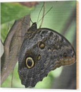 Superb Markings On An Owl Butterfly In A Garden Wood Print
