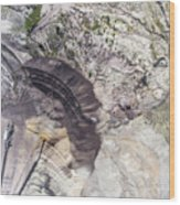 Surface Coal Mining In Poland. Destroyed Land. View From Above.  Wood Print