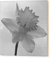 Surfacing Image Of A Daffodil Wood Print