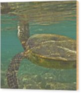 Surfacing Seaturtle Wood Print
