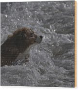 Surfer Dog 1 Wood Print