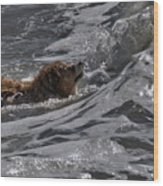 Surfer Dog 2 Wood Print