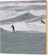 Surfing At Sennen Cove Cornwall Wood Print