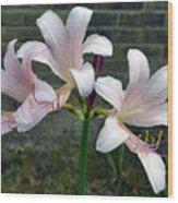 Surprise Lilies Wood Print