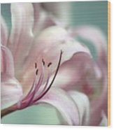 Surprise Lily Pink Wood Print