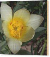 Surprising Sunny Tulip Wood Print