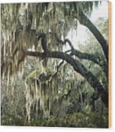 Surreal Gothic Savannah Georgia Trees With Hanging Spanish Moss Wood Print