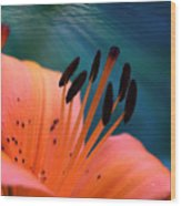 Surreal Orange Lily Wood Print