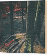 Surreal Red Leaves In A Dark Forest Finland Wood Print