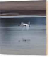 Surreal Swans Wood Print