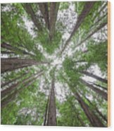 Surrounded By Giants Wood Print