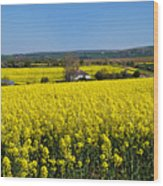 Surrounded By Rapeseed Flowers Wood Print
