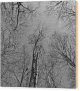 Surrounded Wood Print
