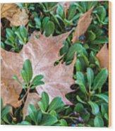 Surrounded Leaf Wood Print