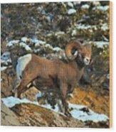 Surverying The Jasper Landscape Wood Print