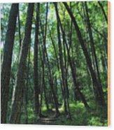 Susan Creek Indian Mound Trail Wood Print