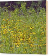 Susans In A Green Field Wood Print