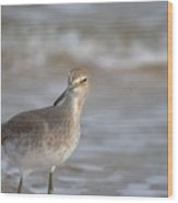 Suspicious Willet Wood Print